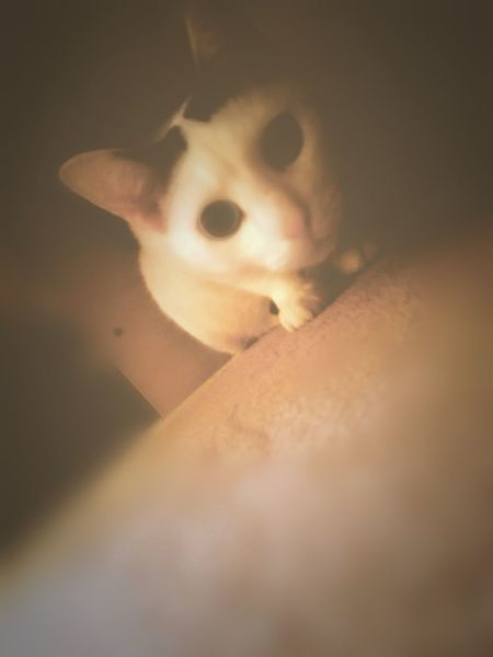 Animal Themes Big Eyes Cunning Ideas Indoors  Looking At Camera Looking For Victims Playing With The Animals