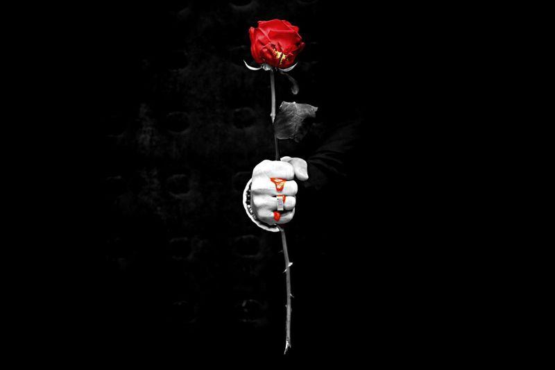 Bleeding Rose -