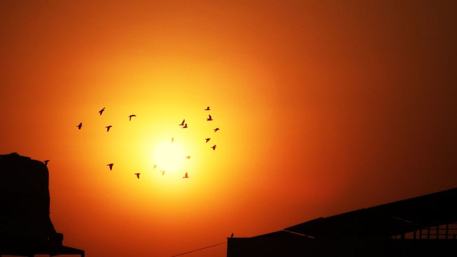 Birds Of EyeEm  Birds_collection Watching The World Bird Photography EyeEmNewHere Animal Themes Evening Light Sunset Silhouettes Colored Background Built Structure City Eveningsky Beauty In Nature Birdphotography Sunset_collection Sunset Colours Evening Sky Buildings & Sky