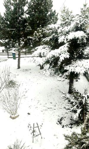 White Snow ❄ Finally Winter Beautiful ♡