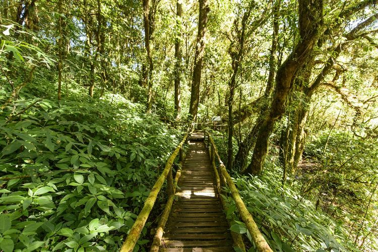 Angkha Nature Trail Plant Tree Growth Forest Direction The Way Forward Tranquility Nature Land Green Color Beauty In Nature Day Tranquil Scene No People Scenics - Nature Outdoors Lush Foliage Footpath Foliage Non-urban Scene Diminishing Perspective WoodLand Wood Footbridge Long
