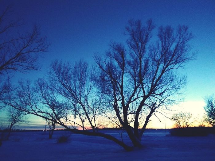 Last Sun Set Last Sunset Sunset Minnesota Minnesnowta Sky Sky Colors 2018 EyeEmNewHere Love Light Tree Winter Frost Light And Shadow Tree Snow Bare Tree Cold Temperature Branch Winter Blue Sunset Ice Sky