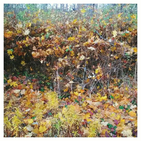 VSCO Autumn Fall осень EyeEm краски осени Autumn Colors 🍁🍂