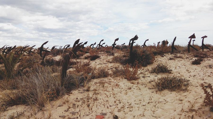 Landscape Sky Grass Arid Climate Non-urban Scene Remote Beauty In Nature Scenics Cloud Outdoors Ancora Ancoras Dunas Dunes Anchor Anchorage Anchored Anchors Water Anchor Bower Barril Cloudy Barril Beach Praia Do Barril Algarve