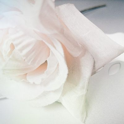 Photoproject365 June2015 Clovewebstudio White Flower Day 8 of 365 - White flower