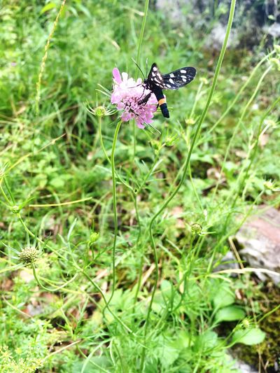 Maninska tiesňava Animal Themes One Animal Animals In The Wild Insect Flower Nature Plant No People Purple Outdoors Fragility Green Color Growth Day Beauty In Nature Animal Wildlife Butterfly - Insect Pollination Freshness Close-up