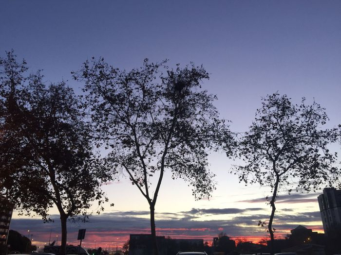 Low angle view of silhouette trees against sky at sunset