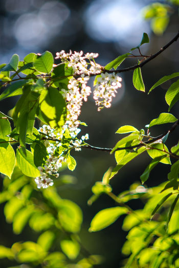 Beauty In Nature Blossom Branch Branches Close-up Day Flower Flowers Food And Drink Fragility Freshness Green Color Growth Healthy Eating Leaf Leaves Nature No People Outdoors Plant Spring Summer Sunlight Tree