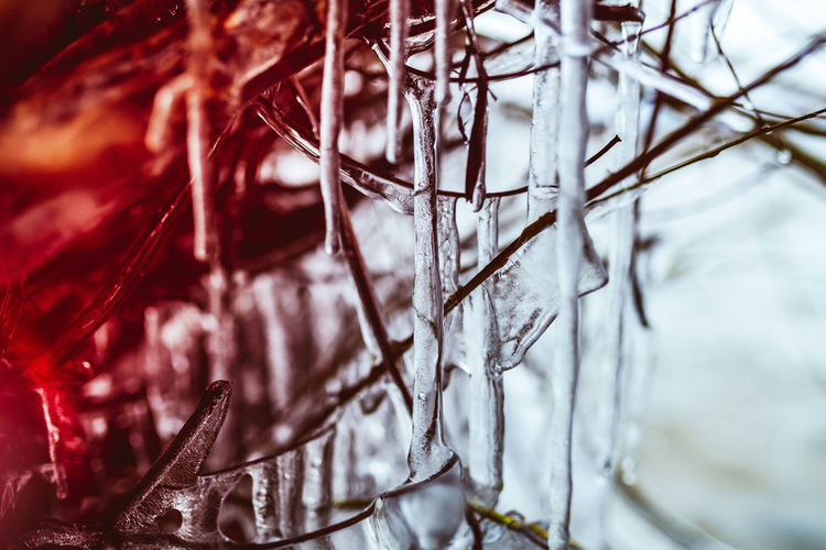 Close-up of icicle on plant
