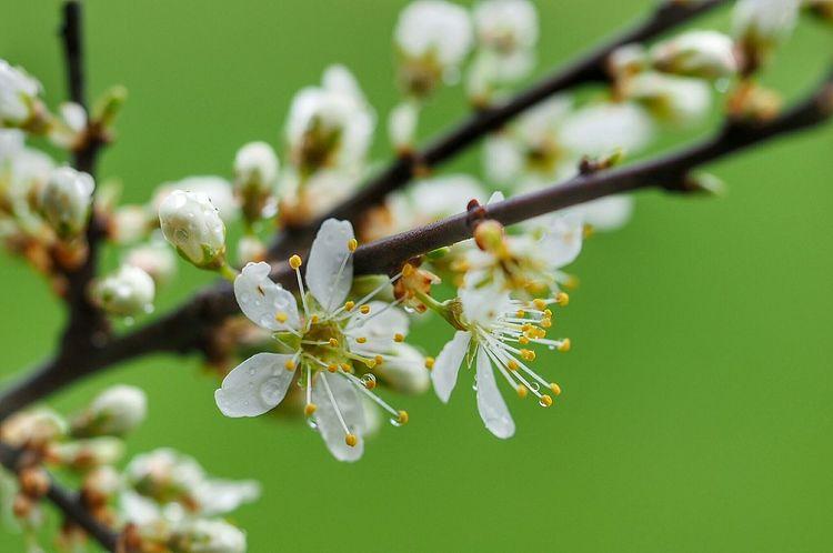 My Point Of View Eyemnaturelover Macro Flower Spring