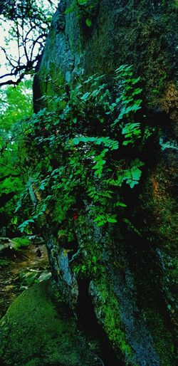 Fern with Moss on Rock Beauty In Nature Moss On Rock Fern On Rock Emerald Green Plant Beauty Untouched Beauty In Nature Hidden Trail Lush Greenery