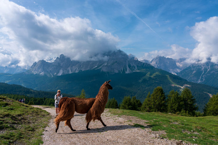 Woman by llama on footpath against mountains and sky