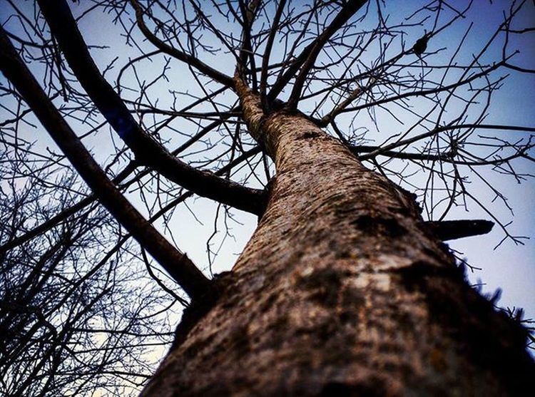 کلاردشت درخت
