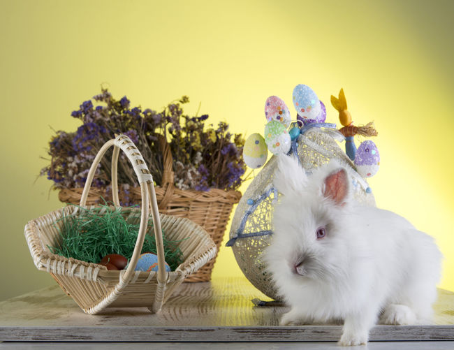 Bunny 🐰 Easter