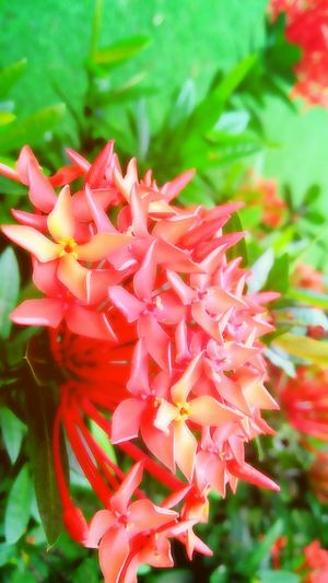 Flower Plant Red Nature Growth Beauty In Nature Petal Flower Head Day No People Outdoors Close-up Freshness Fragility First Eyeem Photo