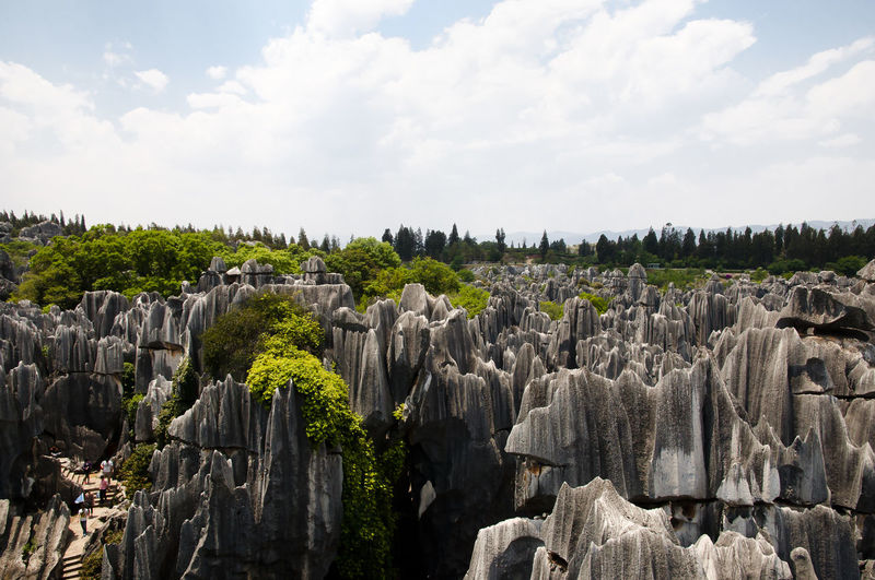 Panoramic View Of Trees Against Cloudy Sky