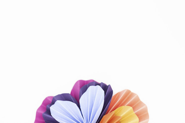 Close-up of multi colored flower against white background