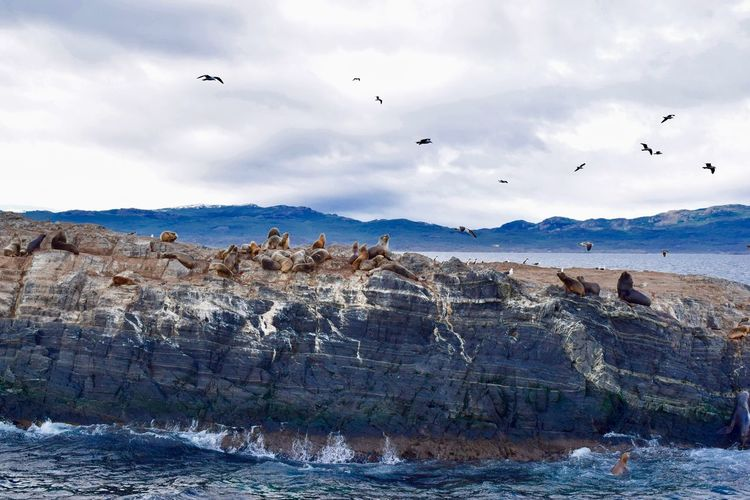 Birds flying over sea lions against sky