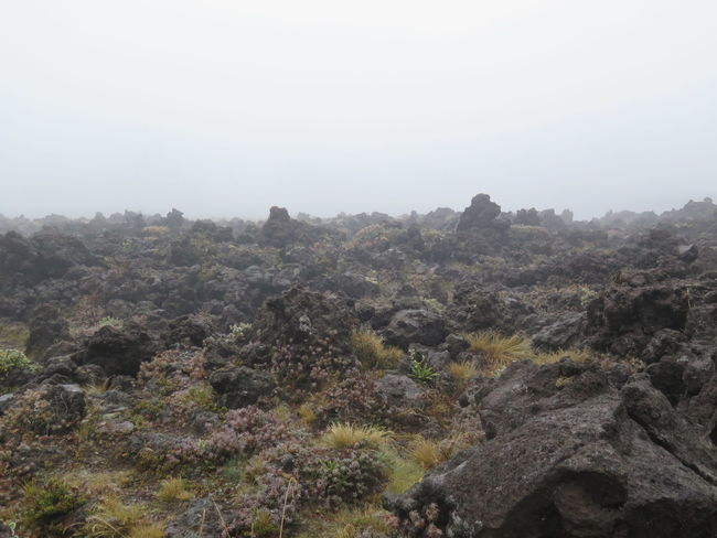 Beauty In Nature Day Foggy Growth Hill Landscape Mist Mordor Mountain Nature New Zealand No People Non-urban Scene Outdoors Plant Rock Rock - Object Scenics Sky Tongariro Tongariro Crossing Tranquil Scene Tranquility Tree Volcano