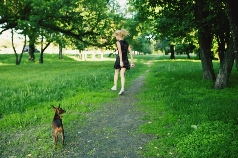 The Essence Of Summer running away out of this Spring 2016 Dog Walking That's Me DogLove Minpin another one pic of me directed by me and taken by a young photographer))) Cute Girly Fun