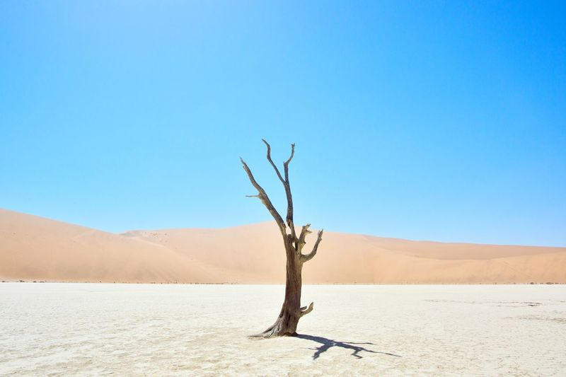 Bare tree in a desert
