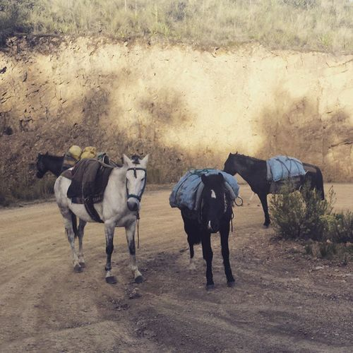 Bolivia Tunari 4600metros Freedom Nature Travel Traveling Southamerica Roadtrip Mountain Horse Horses