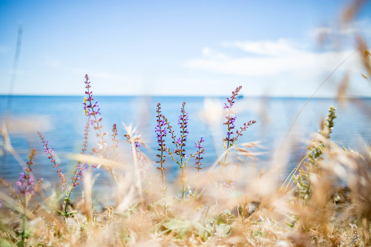 Beauty In Nature Cloud - Sky Day Flower Flowering Plant Fragility Freshness Growth Horizon Over Water Land Nature No People Outdoors Plant Scenics - Nature Sea Selective Focus Sky Tranquil Scene Tranquility Vulnerability  Water