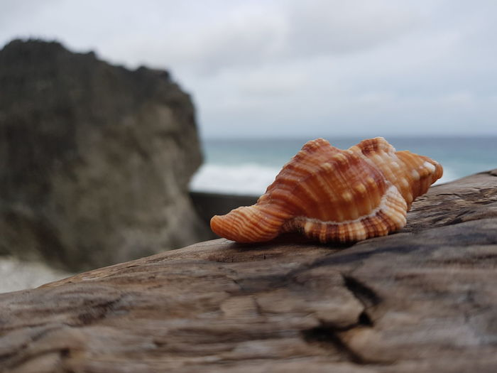 Close-up of shell on rock by sea against sky