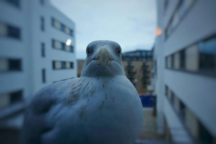 Hotel Window in Brighton Someone's Begging For Food...lol Seagull