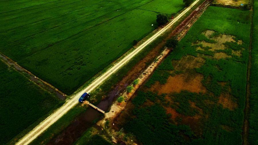 sawah padi air papan Johor, Malaysia Djiphantom Djiphantom3pro Aerial View Aerialphotography EyeEm Selects Eyebird Agriculture Farm Field Rural Scene Crop  High Angle View Green Color Landscape Outdoors Beauty In Nature