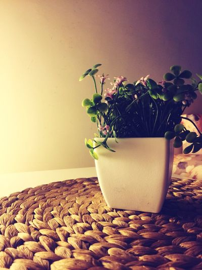 Flower Pot First Eyeem Photo