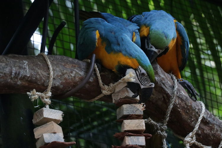 View of birds perching on branch