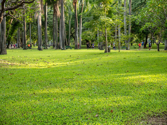 Selective focus on foreground at grass with emotion blurred of tree and people in the public park. A beautiful nature of green tree in sunny day. Exercise Field Running Beauty In Nature Botany Crowd Day Environment Grass Green Color Group Of People Growth Incidental People Land Landscape Lush Foliage Nature Outdoors Park Park - Man Made Space People Plant Public Places Tree Weed
