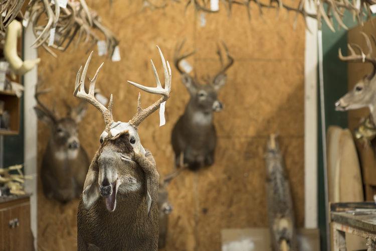 Deer in a wall