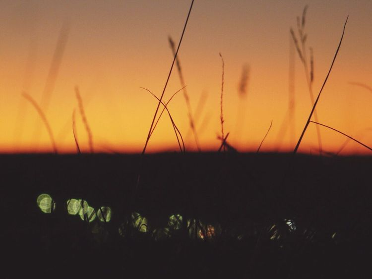 Sunset Plant Nature Outdoors No People Small Town City Lights Grunge Illuminated Sky Nature