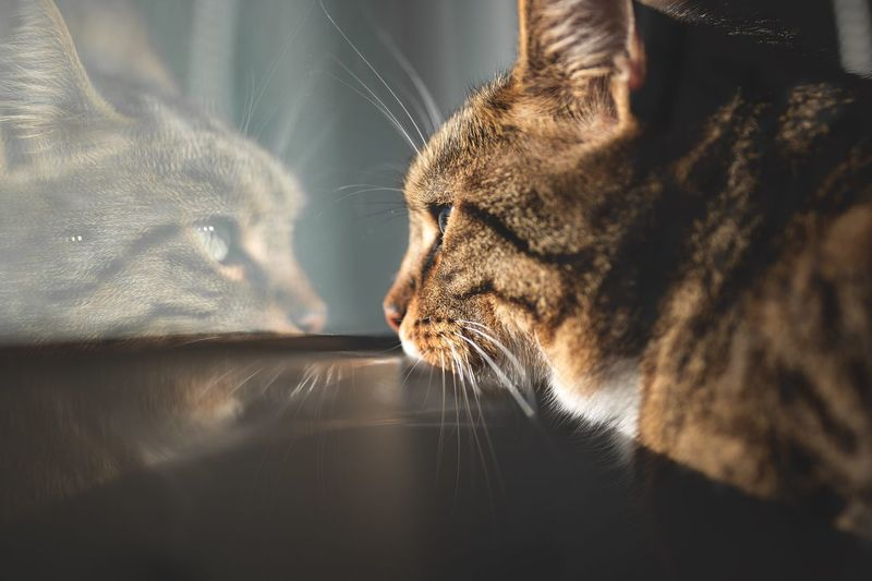 Close-up of a cat