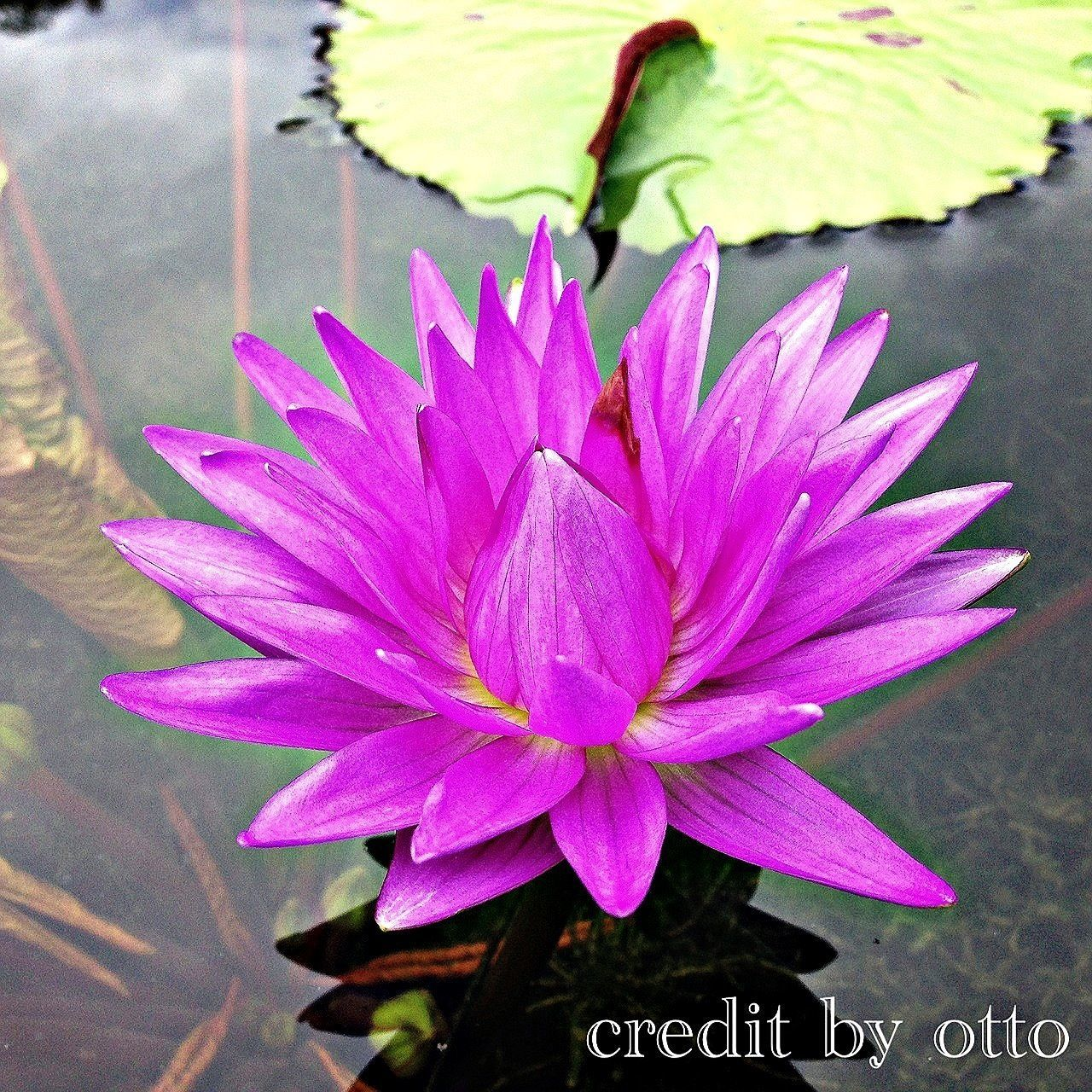 flower, nature, petal, growth, beauty in nature, plant, fragility, day, no people, close-up, leaf, flower head, outdoors, freshness, water