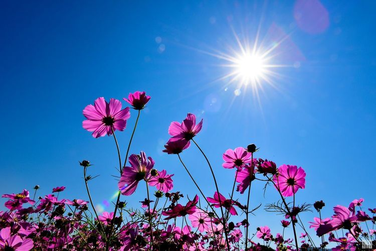 Цветы.. голубой цветы небо красота
