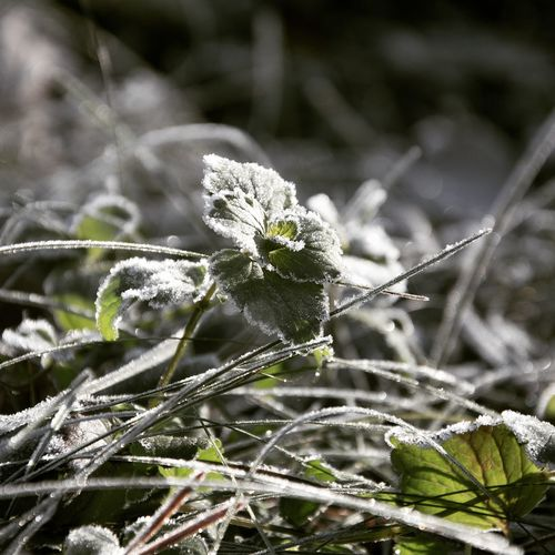 Morning frost on green grass and leaves Nature Growth Plant Outdoors Flower Close-up Beauty In Nature Flower Head Fragility Freshness EyeEmNewHere Frosty Mornings Frost Morning Leaves Silvery Shiny Lighting Light And Shadow Cold Wild Country Monochrome Backgrounds Miles Away