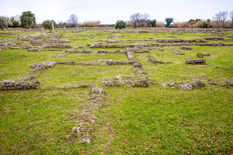 Italy Paestum Plant Field Grass Land Landscape Tranquil Scene Tranquility Day Environment Green Color No People Nature Tree Scenics - Nature Beauty In Nature Growth History Outdoors Non-urban Scene Sky Ancient Civilization
