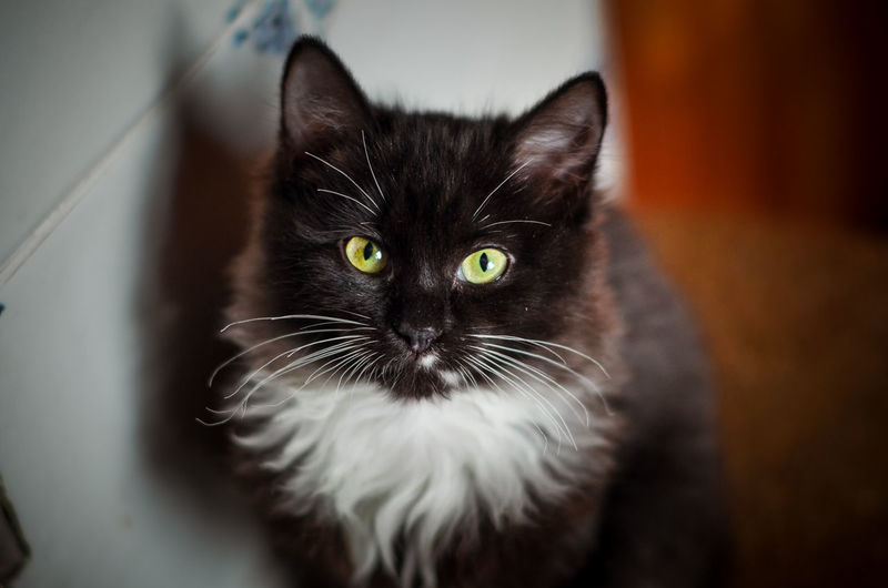 Pets Domestic One Animal Domestic Animals Mammal Cat Domestic Cat Nikon5100D Nikon 50mm 50mm 1.4 Homeless Animal Black Cat Russia Yellow Eyes Yellow Eyed Cat Homeless Cats Cat's Eyes Kitten Black And White Cat Stove Animal Eye Looking At Camera No People