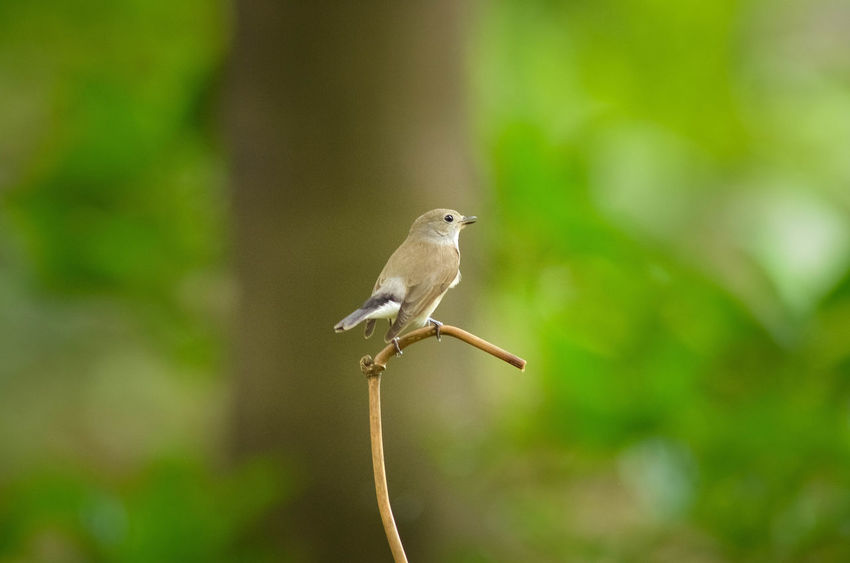 Animal Animal Themes Animals In The Wild Avian Beak Beauty In Nature Bird Day Focus On Foreground Nature No People One Animal Perching Small Tranquility Wildlife Zoology