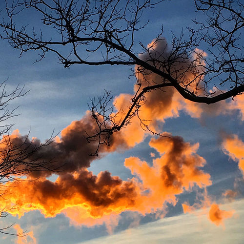 Angry Sky Atmosphere Atmospheric Mood Cloud Cloud - Sky Clouds Clouds And Sky Cloudscape Cloudy Dramatic Sky Light Majestic Moody Sky Orange Color Outdoors Silhouette Sky Storm Cloud Sun Tree Branches Weather