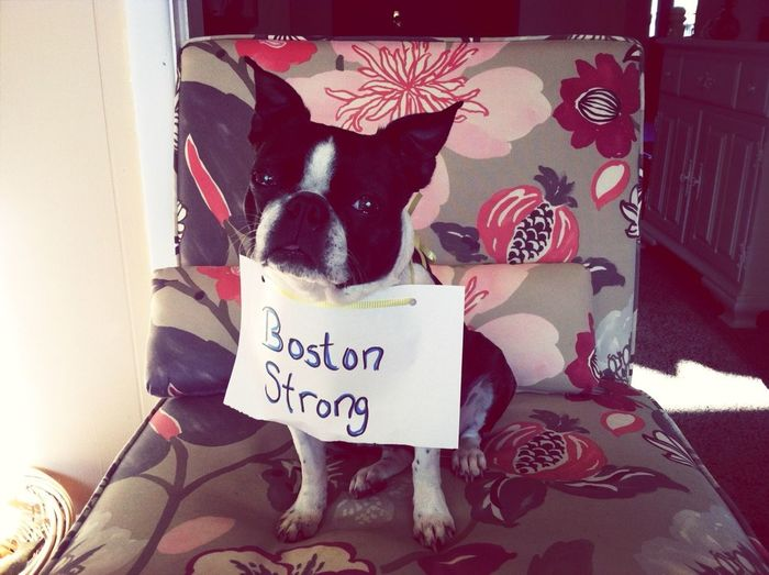 Pray For Boston ! My Puppy Does