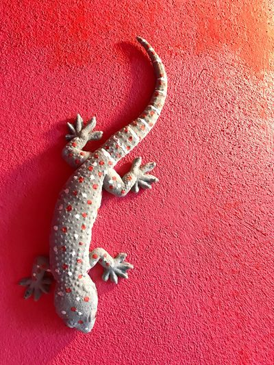 The gecko is on