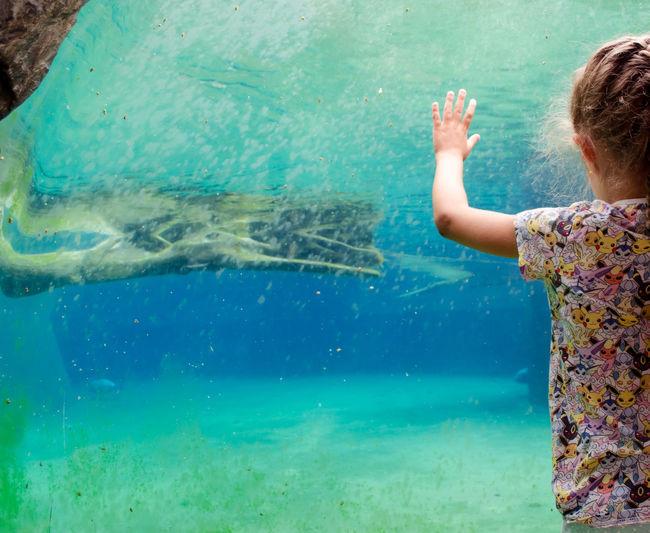 Child watching an aquarium