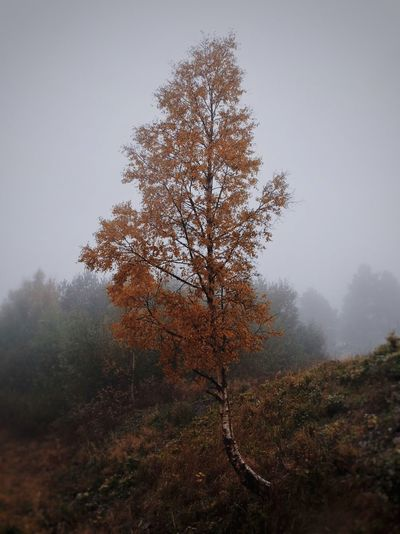Tree in forest during autumn