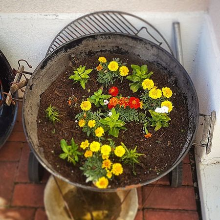Best Idea Ever! My grandparents have re-purposed their Weber. The bottom had rusted out so they put stones in the bottom for drainage and then planted sturdy flowers as well as some herbs. So beautiful! Ingenious Weber Clever Southafrica ILoveSA nofilter instahappy happiness flowers planting CapeTown grandparents gardening repurposed braai