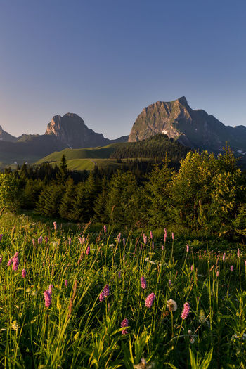 Beauty In Nature Day Environment Field Flower Flowering Plant Freshness Gantrisch Green Color Growth Land Landscape Mountain Mountain Peak Mountain Range Nature No People Outdoors Plant Scenics - Nature Sky Switzerland Tranquil Scene Tranquility