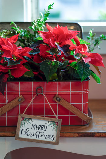 Close-up of red potted plant on table